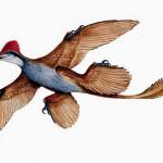 microraptor_01.600